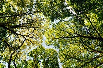 The Trees by David Pyatt