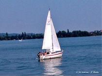 Segelboot auf dem Bodensee von shark24