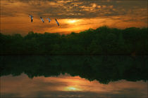 BRING ON THE NIGHT von tomyork