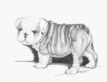 Bull Dog Puppy by Brandy House