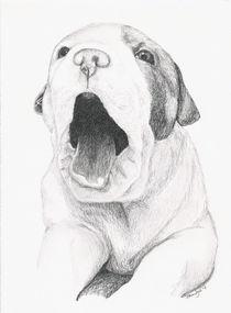 Puppy-yawn