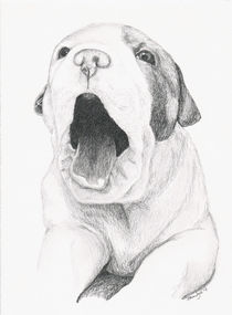 Yawning Puppy by Brandy House