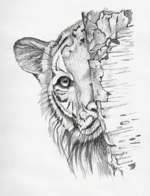 Peeking Tiger by Brandy House