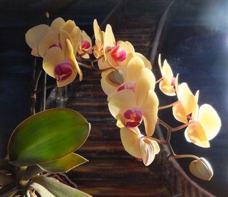 Mutti-s-orchideen-2
