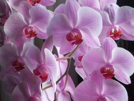 Mutti-s-orchideen-8