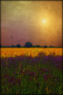 SUNSET IN THE MEADOW von tomyork