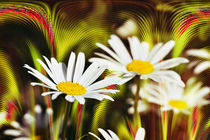 Blumenfeuerwerk  by Barbara  Keichel