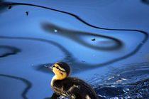little ducks dreams by mateart