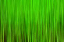 »green« von Peter Bergmann