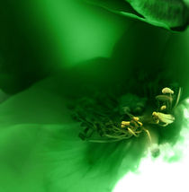 Green by florin