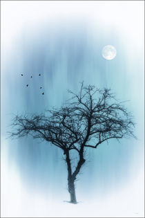 A TREE IN BLUE von tomyork