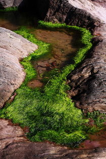 Rock Pool von Aidan Moran