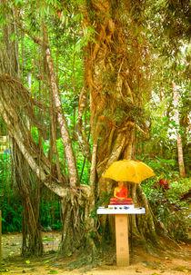 Ein Buddha Schrein unter einem Bothi Baum von Gina Koch