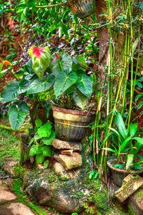 Tropische Gartenwildnis von Gina Koch