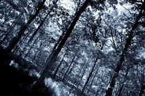 The Cool Forest von David Pyatt