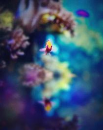 Little Fish von olgasart