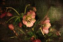 Im Abendlicht  by Barbara  Keichel