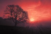 warmes Licht  by Barbara  Keichel