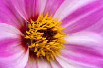 Flower Power by Ralph Patzel