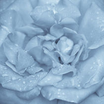 Blue Rose von perfectlazybones