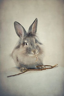 'Rabbit / 3' by Heidi Bollich