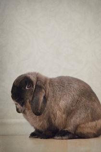 Rabbit / 2 by Heidi Bollich