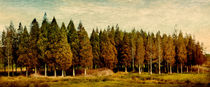 Stand of Trees von Linde Townsend