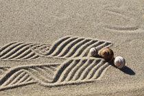 Dekoration aus Sand und Schneckenhäusern (05) von Karina Baumgart