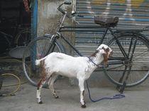 Bike Lover von Bobby Dar
