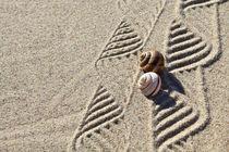Dekoration aus Sand und Schneckenhäusern (04) von Karina Baumgart