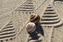 Dekoration aus Sand und Schneckenhäusern (03) von Karina Baumgart