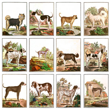 Large-dogs-collection-3x4-dot-7800x7800