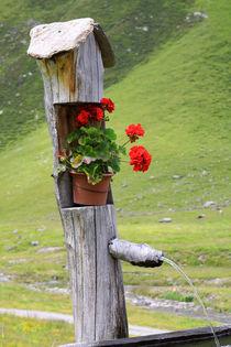Brunnen auf einer Bergalm in Südtirol von Karina Baumgart