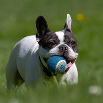 Dog in the park von Ralph Patzel