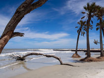 Hunting Island Beach by Louise Heusinkveld