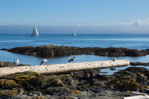 Fog bank in the Strait of Juan de Fuca  by Louise Heusinkveld
