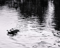 """""""The Ugly Duckling"""" by JACINTO TEE"""