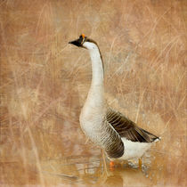 A Goose is a Goose by Betty LaRue
