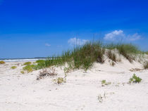 Sand Dune and Sea Oats von Louise Heusinkveld