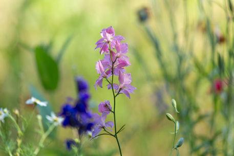 Wildflower-meadow0365