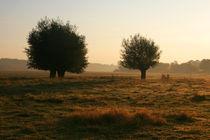 Kopfweiden-Impression im Herbst (10) by Karina Baumgart