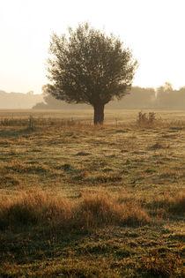 Kopfweiden-Impression im Herbst (09) von Karina Baumgart