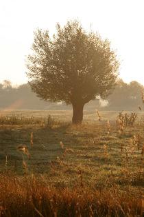 Kopfweiden-Impression im Herbst (08) von Karina Baumgart
