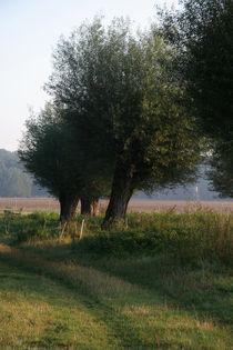 Kopfweiden-Impression im Herbst (07) von Karina Baumgart