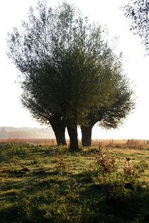 Kopfweiden-Impression im Herbst (04) von Karina Baumgart
