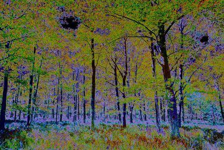 Digi-forest-8