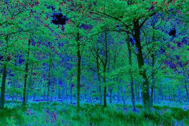 Digi-forest-10