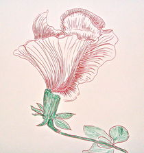Hibiscus in Lines by Christine Chase Cooper