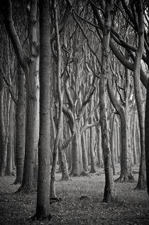 Baum #8 von J.D. Hunger