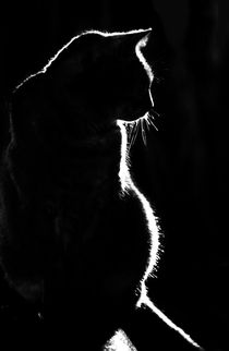 Silhouette of a cat by Sheila Smart